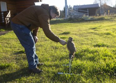 Is Falconry Right For You?